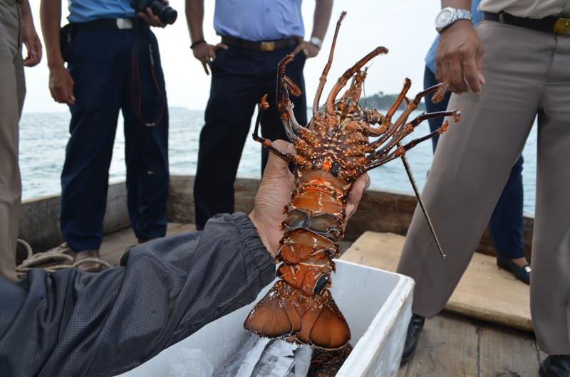 Dok. Lobster (Foto: KKP)