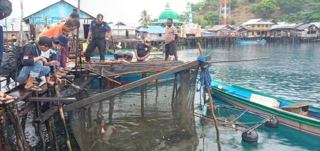 Dugong dipelihara sementara di jaring apung (Foto: KKP)