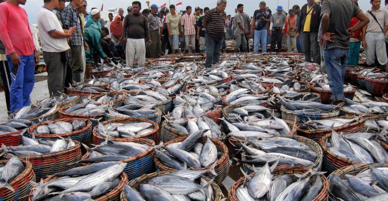 Dok. KKP menyiapkan strategi untuk memaksimalkan penyerapan KUR di sektor perikanan